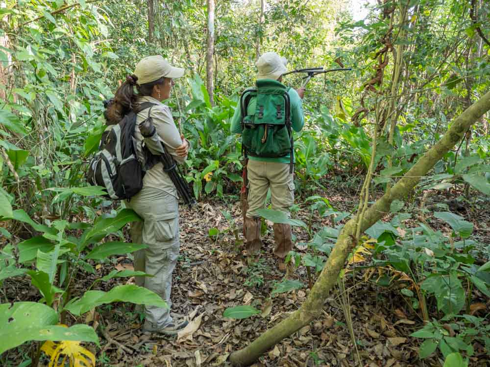 Proyecto Titi Conservation tracking Cotton Top Tamarin
