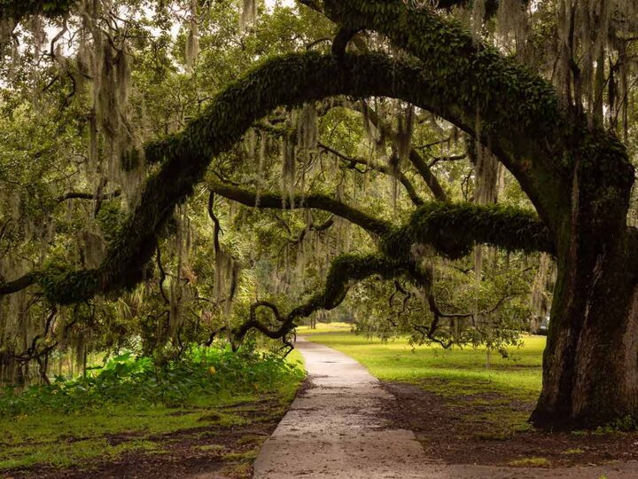 Unusual things to do in new orleans- city park and mossy tree